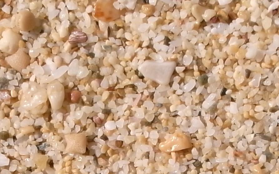 「白い砂の浜 サンゴ」の画像検索結果