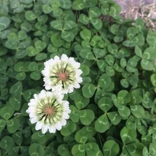 Blog Home > flower school die・farbe in  フルール