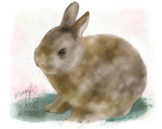 ウサギの画像 p1_12