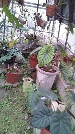 沖縄バナナブログ