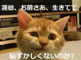 【党首討論】安倍首相「IR法案の提案者には蓮舫氏の側近も参加」 [無断転載禁止]©2ch.net YouTube動画>21本 ->画像>16枚