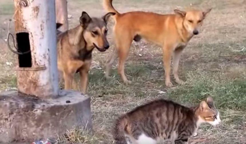 犬の集団(野犬)に対し、たった1匹で立ち向かう勇敢な猫│ ...